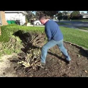 Digging up a Tree or Shrub - Garden Shovel