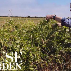 How to create a wild flower arrangement | House & Garden